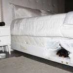 سرير للكلب وصاحبه