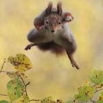 صور الحيوانات الطريفة
