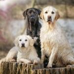 صور مبهرة لكلب ظريف