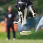 كلاب تطير