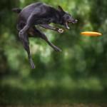 كلاب تطير  7