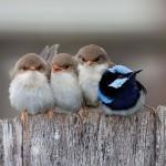 أمومة الطيور