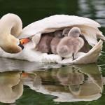 صور مذهلة لأمومة الطيور .. حنان الأم !!