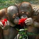 الحيوانات تستنشق الزهور