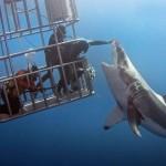 تحدى سمكة القرش