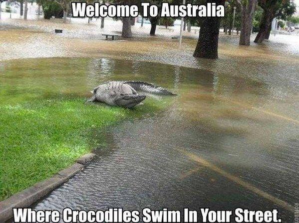 تماسيح كبرى تسبح فى الشوارع