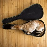 حيوانات تنام فى اماكن غريبة