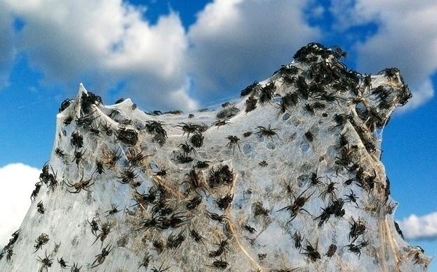 عناكب وبيوت عناكب في كل مكان