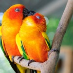 البوس عند الحيوانات و الطيور