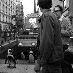 الحيوانات فى شوارع لندن وباريس