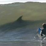 صور مخيفة شاهدها قبل السباحة