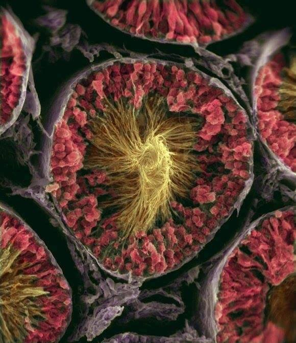صور من داخل جسم الإنسان