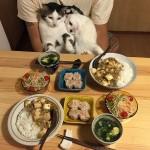 تعبيرات القطط على انواع الطعام المختلفة