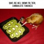 حيوانات فى اوضاع ومواقف غريبة