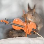 سناجب تعزف على ادوات موسيقية