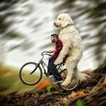 صور الكلب العملاق