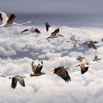 تحليق الطيورعلى شكل v