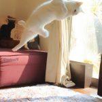 قطة بترقص بالية