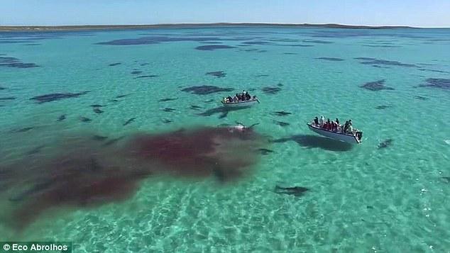 معركة بين 70 قرشاً وحوت ضخم