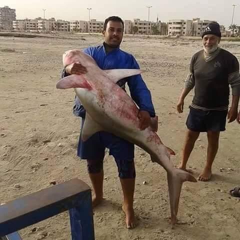 اصطياد سمكة قرش فى بورسعيد