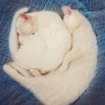 اجمل توأم قطط فى العالم
