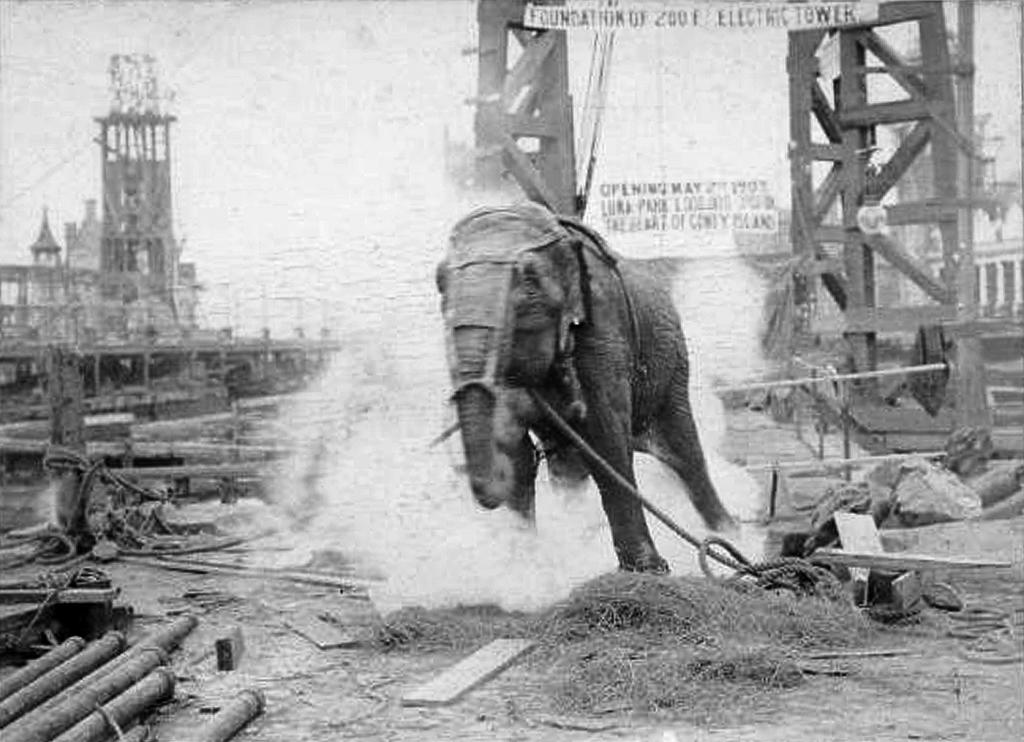 عملية اعدام الفيلة مارى