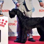 مسابقة ملكة جمال الكلاب