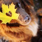 استمتاع الكلاب بقدوم فصل الخريف